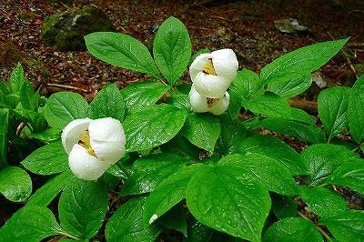 きれいな花もちらほら・・・