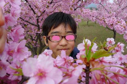 桜???が満開