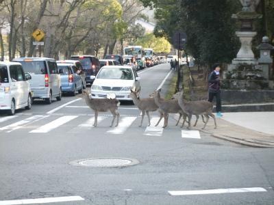 横断歩道をきちんと渡ります・・・実際は渡りませんでしたが。