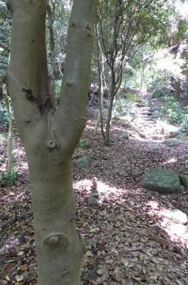 またまたケルンこの木が目印・・・行かれた探してください。