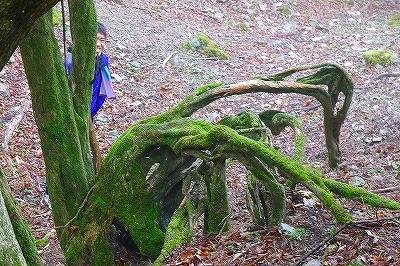根の造形美と坊主・・・坊主の行動が怪しい・・・