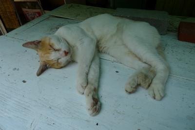 帰り道、軒下で涼しげなこの猫がうらやましかった・・・