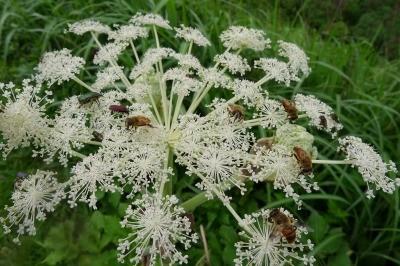 ここにもミツバチが沢山
