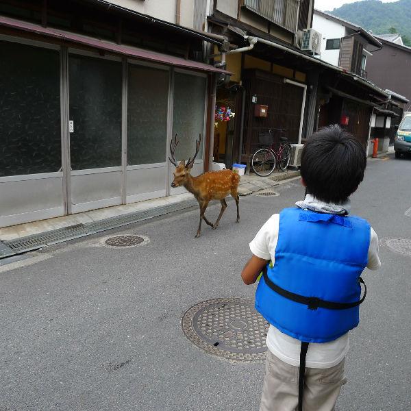 町を鹿が歩く・・・なんかほのぼのとしていいです。