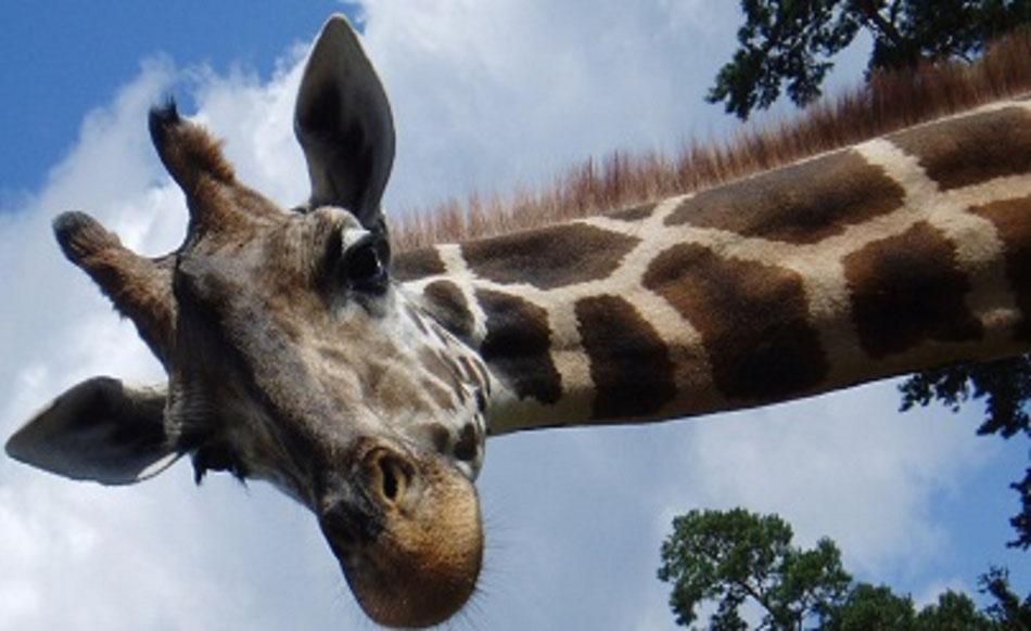 Kenia Rundreisen mit Beratung und Buchung beim Keniakenner Reisebüro Reiselotsen cruise & tours - beliebte Kombireisen Kenia Safari und Badeaufenthalt all inclusive Badeurlaub