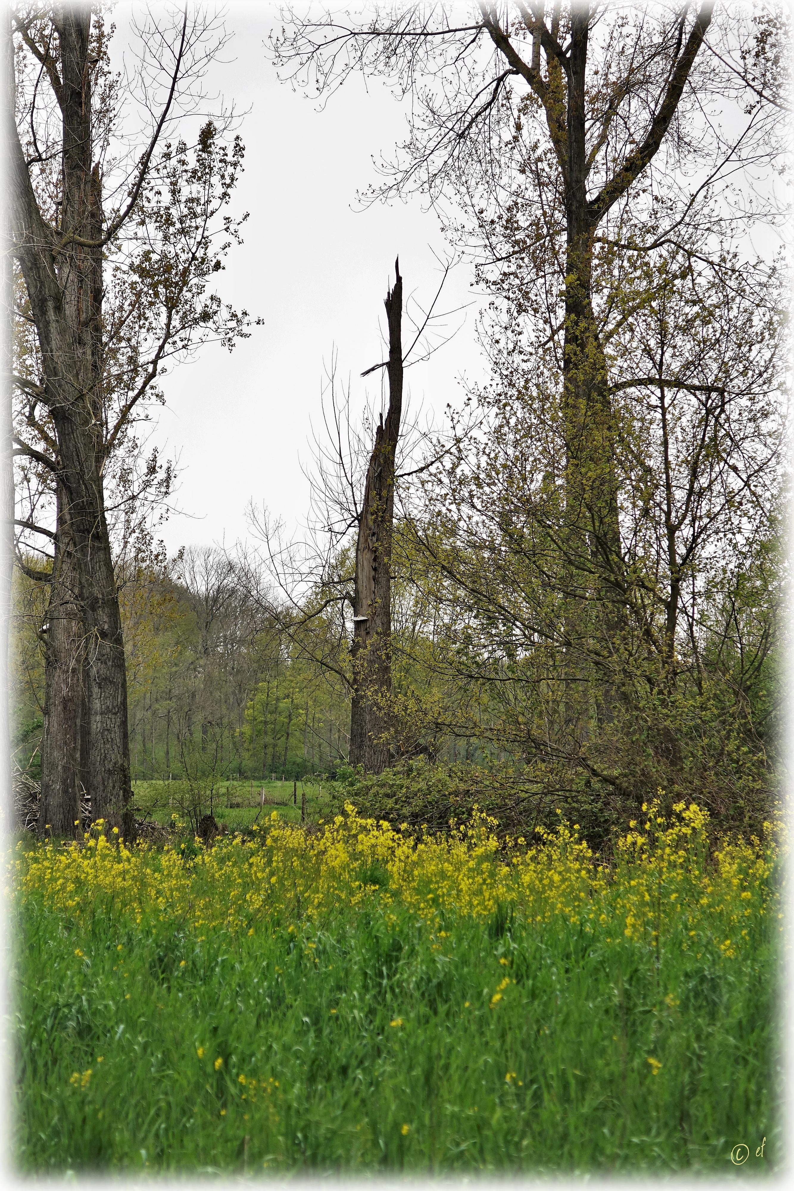 Zwischen Wald & Feldern unterwegs