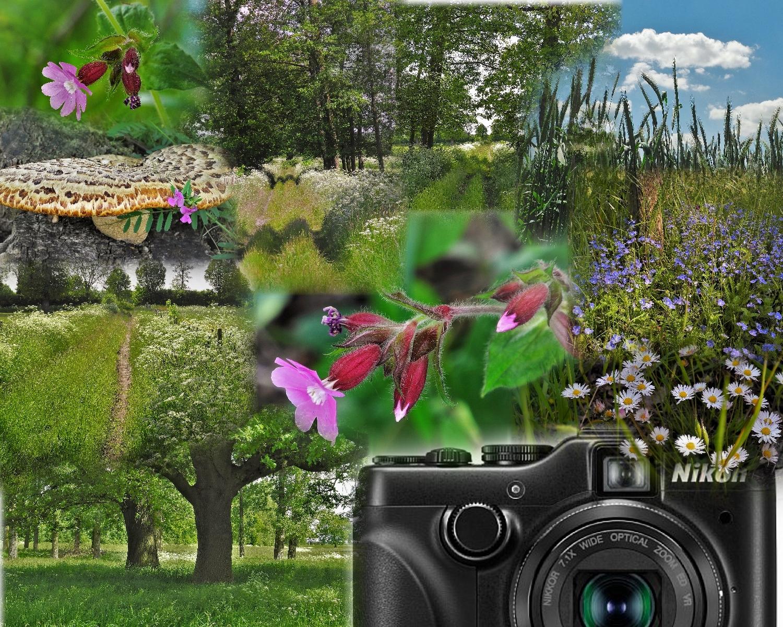 Mit der Cool(en) pix P7100 von Nikon unterwegs Teil II
