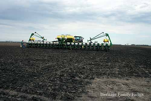 Planting the crop