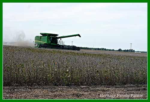 Harvesting beans