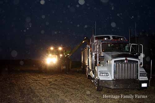 Harvest goes into the late hours of the evening