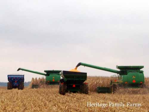 Two carts, Two combines dumping on the go