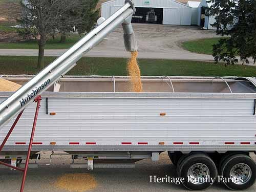 Hauling out corn