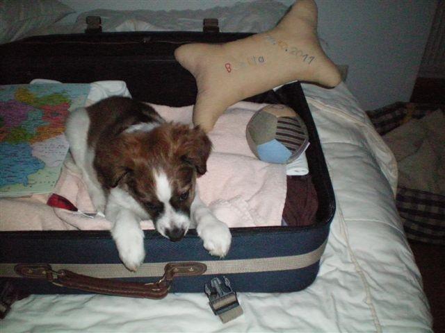 Hoffentlich hält der Koffer mit meinen ganzen Gepäck.