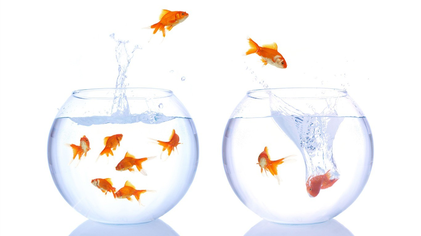 Formations ateliers l 39 instant rs coaching for Entretien bocal poisson