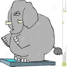 ważenie słonia