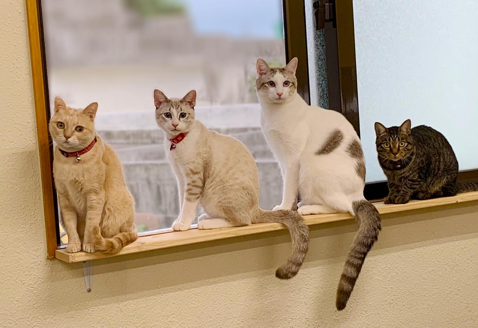 保護猫・里親募集・TNRについて