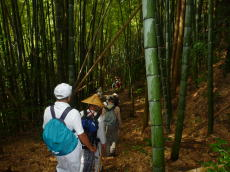 栢の森への途中(竹林)