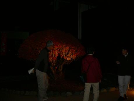 木曽福島宿の夜の徘徊で~す。