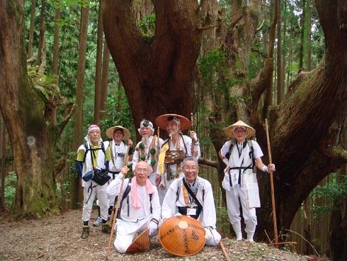 樹齢400年以上の防風林。杉の大木群です