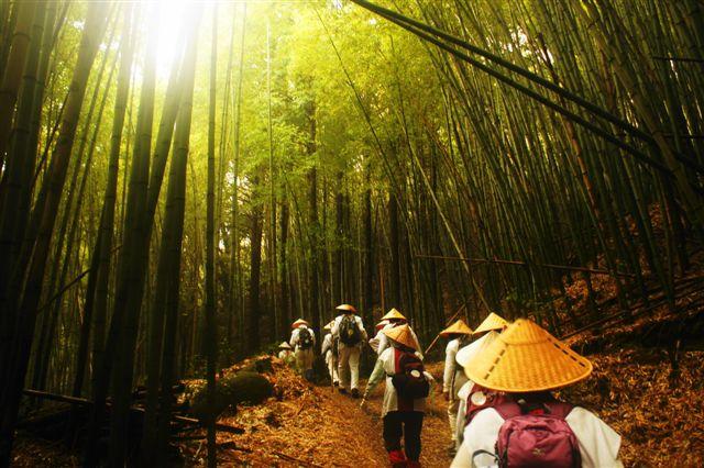 キリシタン自然歩道の竹薮を行く・紙上さん撮影