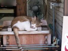 土産物屋店先の猫(気持ちいい)