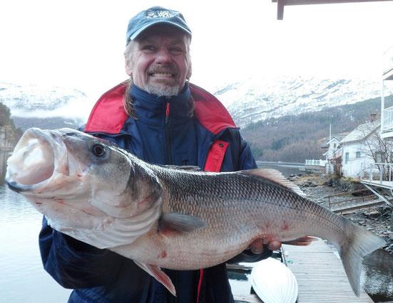 Karsten Gehl mit seinem offiziell zum Norgwegen-Rekord anerkannten Wolfsbarsch, gefangen im Dalsfjord/Bygstad. Es ist der grösste jemals nachgewiesene in Norwegen gefangene Wolfbarsch