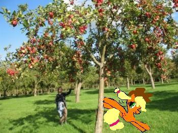 applejack e un melo!