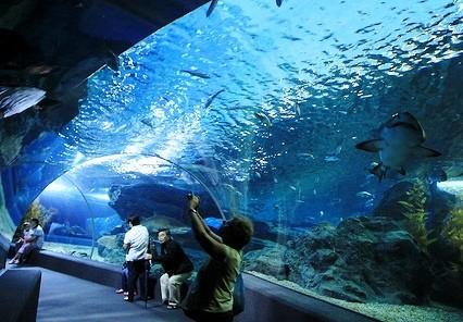 Das Siam Paragon Aquarium befindet sich ebenfalls im gleichnamigen Einkaufszentrum, ein Besuch lohnt sich