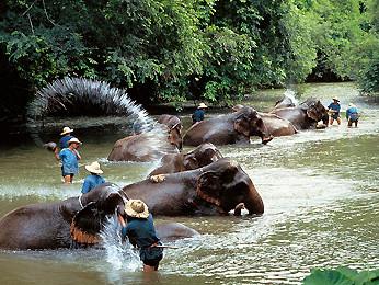Es gibt einige Elefantencamps sowie auch Elefantentouren welche wahlweise zw. 1/2 Tag bis 5 Tage dauern