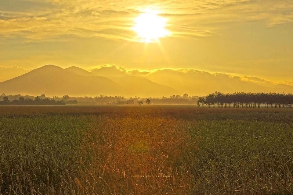 Ein Reisfeld mit der Hügelkette zwischen Trang und Phattalung im Hintergrund