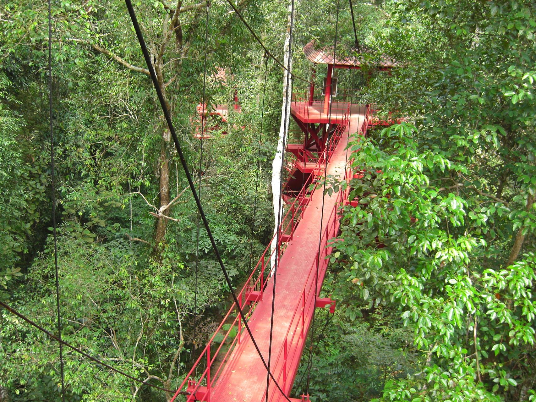 Der Canopy-Walk ist etwas für Abenteurer und liegt im Botanischen Garten
