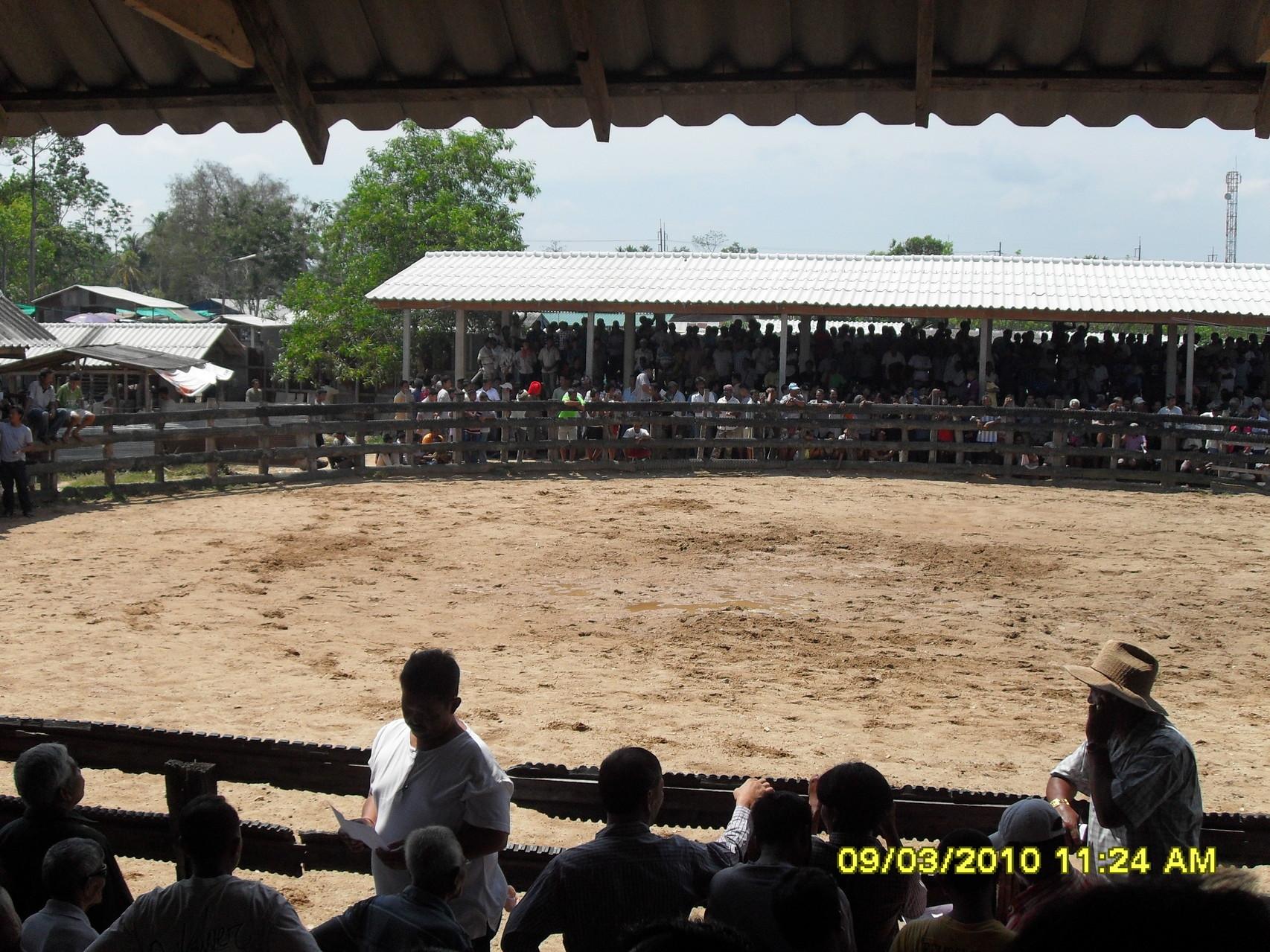 Eine Kuh-Kampf-Arena, hier finden monatlich Kuhkämpfe statt. Diese sind jedoch viel harmloser als die Buffel-Kämpfe