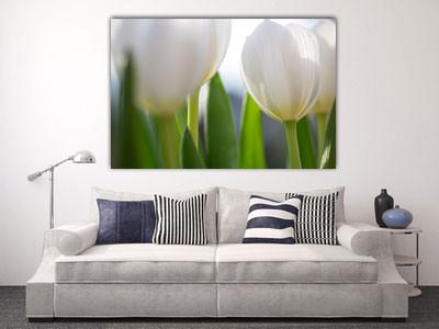 Tulpenschein