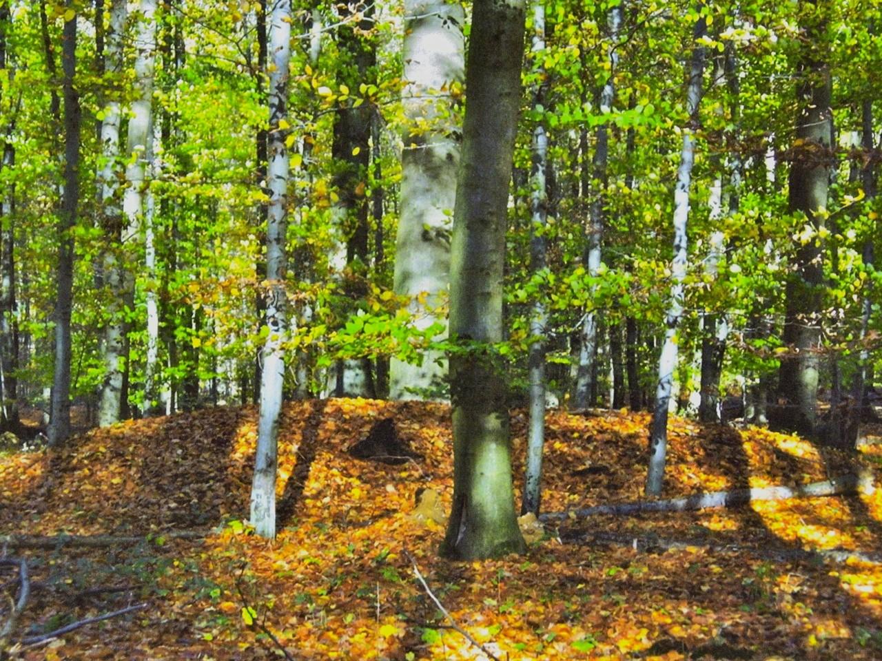 …wie etwa diese Hügelgräber der Kelten, die aus der Latènezeit stammen.