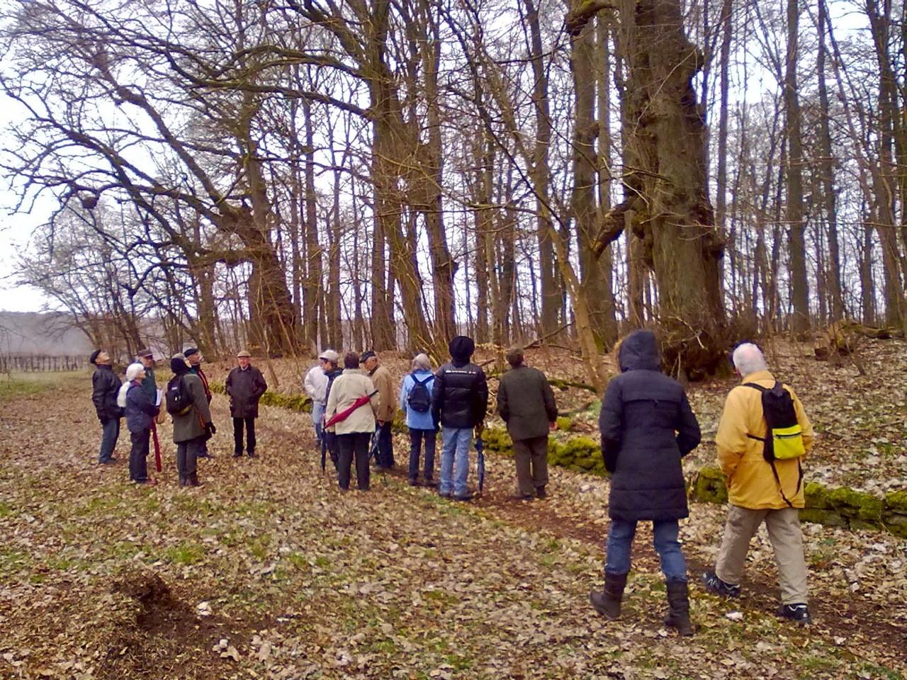 Trotz wechselhaften Frühlingswetters erfreute sich der Waldspaziergang des Weilburger Geschichtsvereins eines guten Zuspruchs.