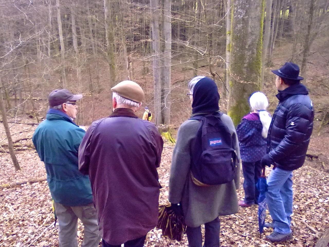 """Zum Abschluss präsentierte Volker Vömel noch die einmalige """"Vierlingsbuche"""", die von ihm in einem Tal nahe Drommershausen entdeckt wurde."""