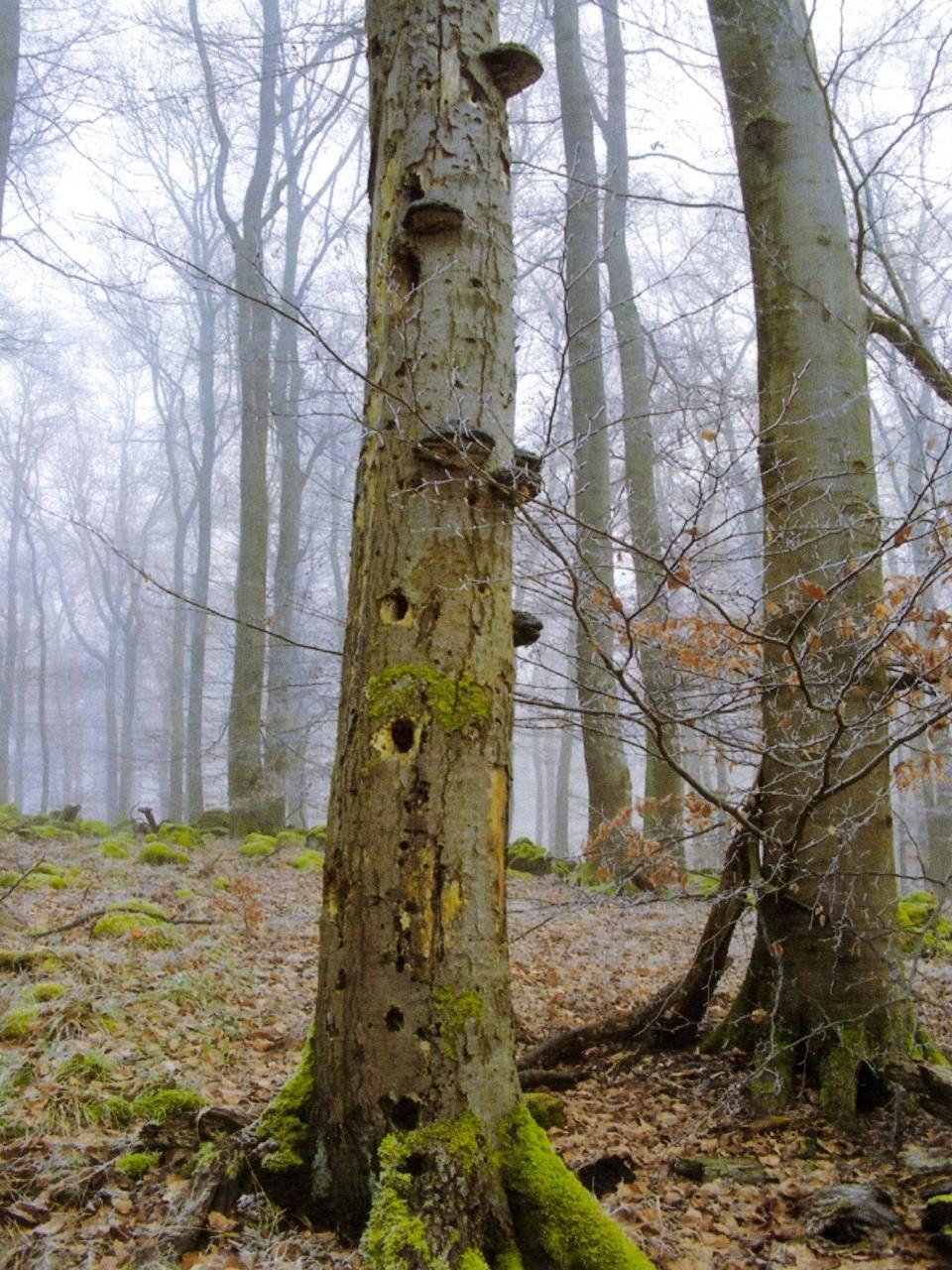 """Auch sogenanntes Totholz war im Weilburger Wald zu sehen. Dabei ist es alles andere als """"tot""""…"""