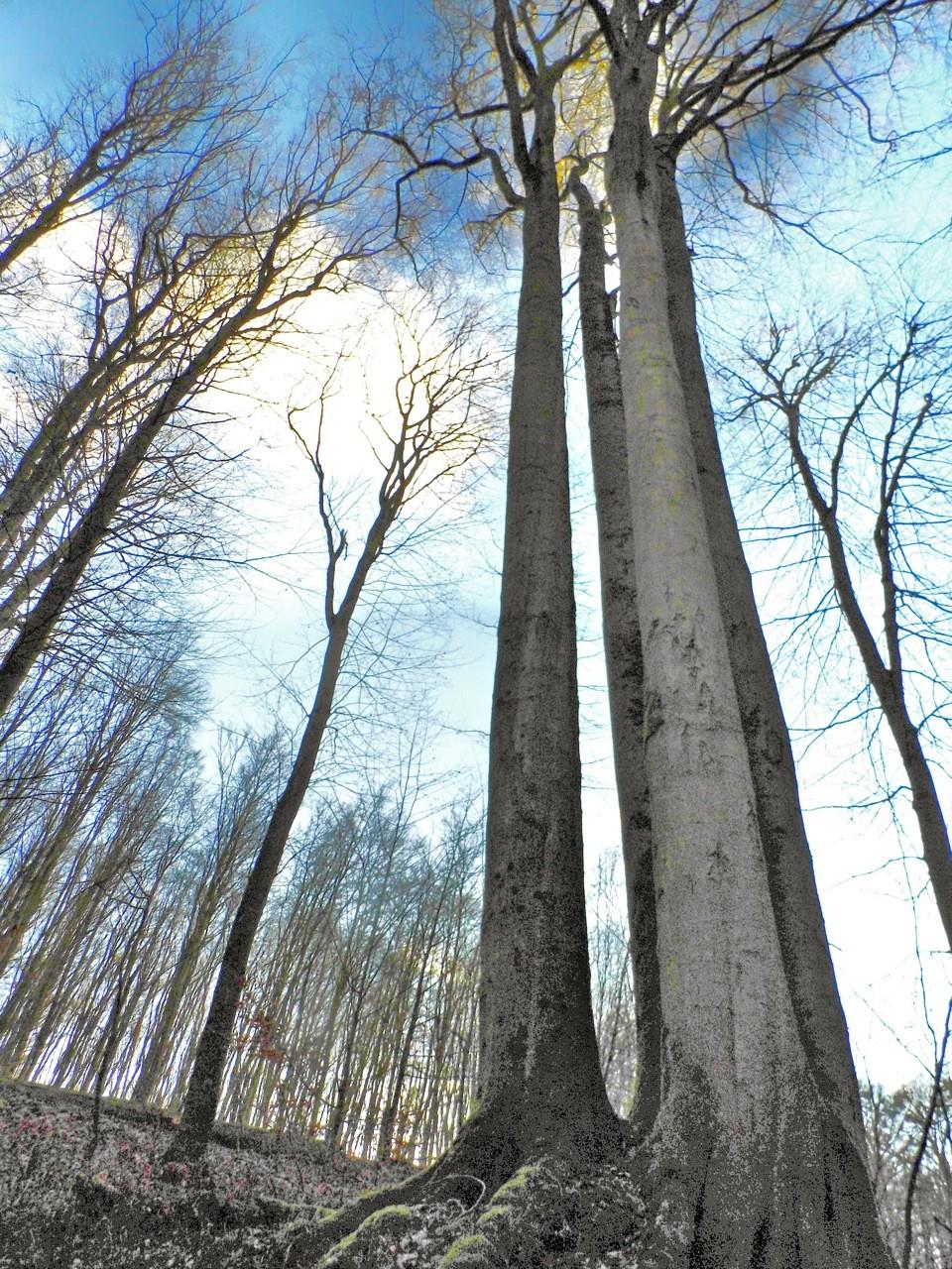 """""""Wie die Pfeiler einer gotischen Kathedrale"""" – Krönung eines gelungenen Waldspaziergangs."""