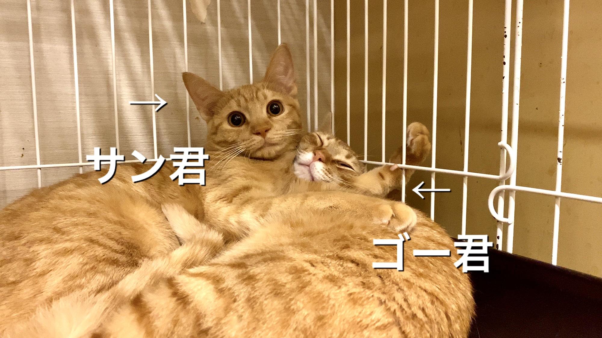 新入り猫さん!サン君&ゴー君!