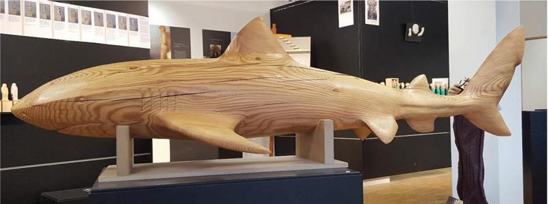 Haifisch - Aaron Plüss