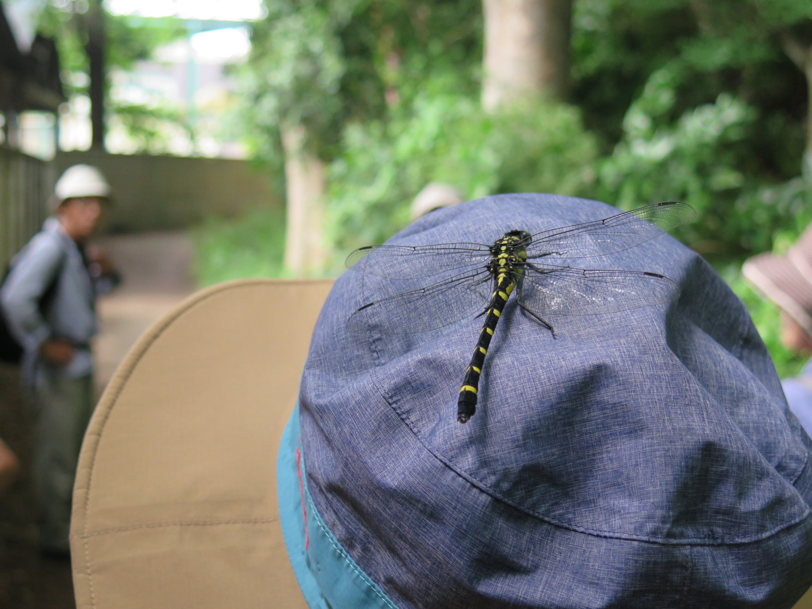 Aさんの帽子にオニヤンマ