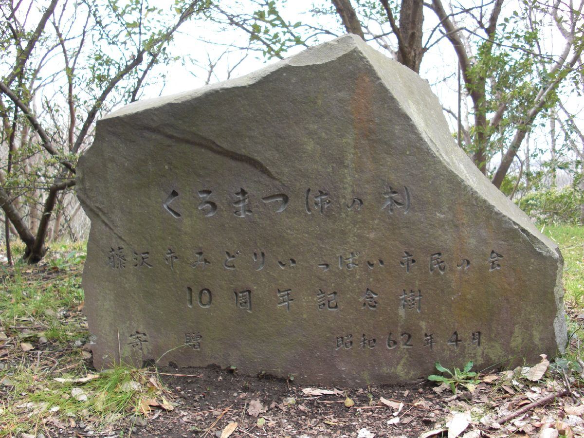 藤沢市の木、くろまつ記念植樹碑