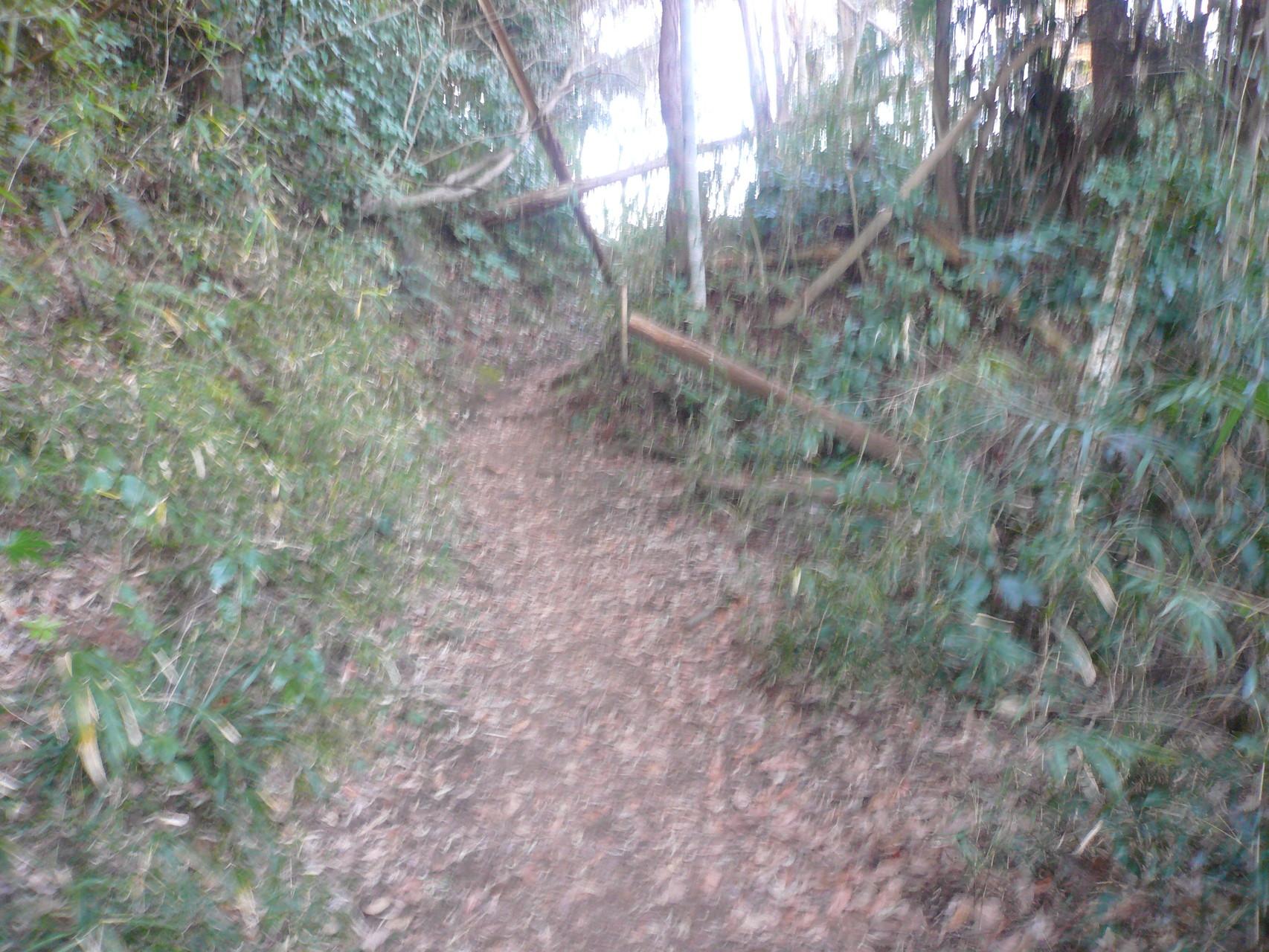 森林浴楽しみながら登る