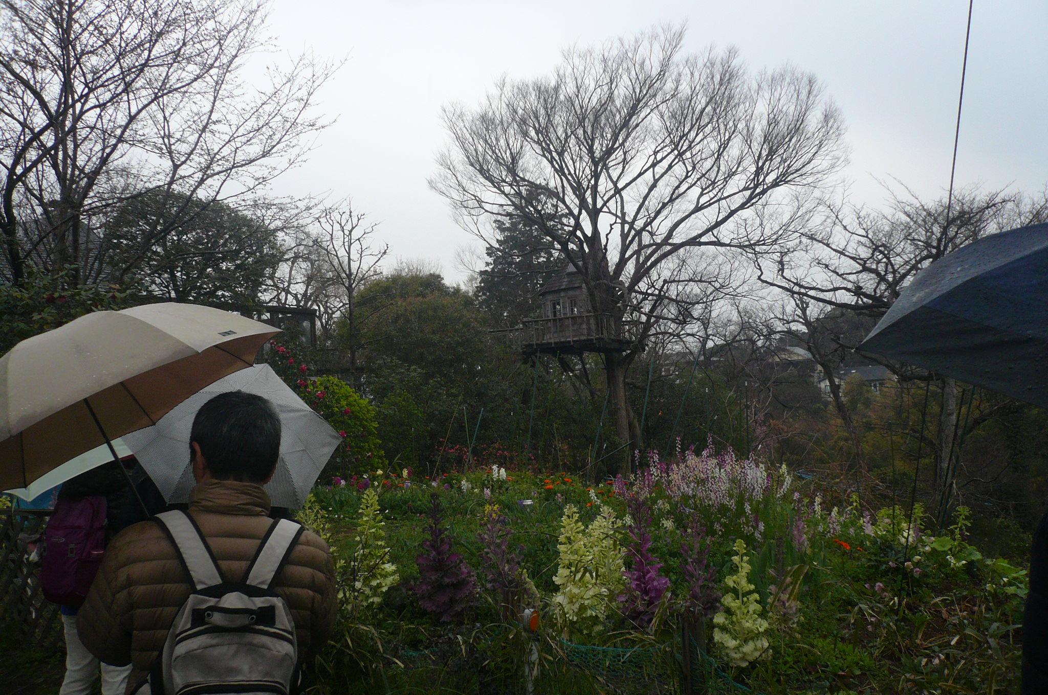 鎌倉山の見事な花畑を見乍ら