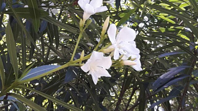 花が一服の清涼感