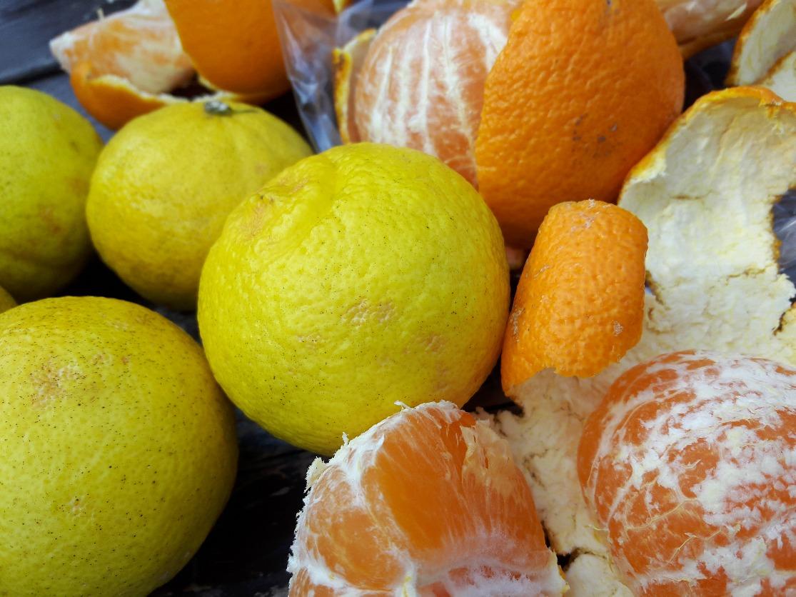 湯河原町産地の柑橘類。うまい!