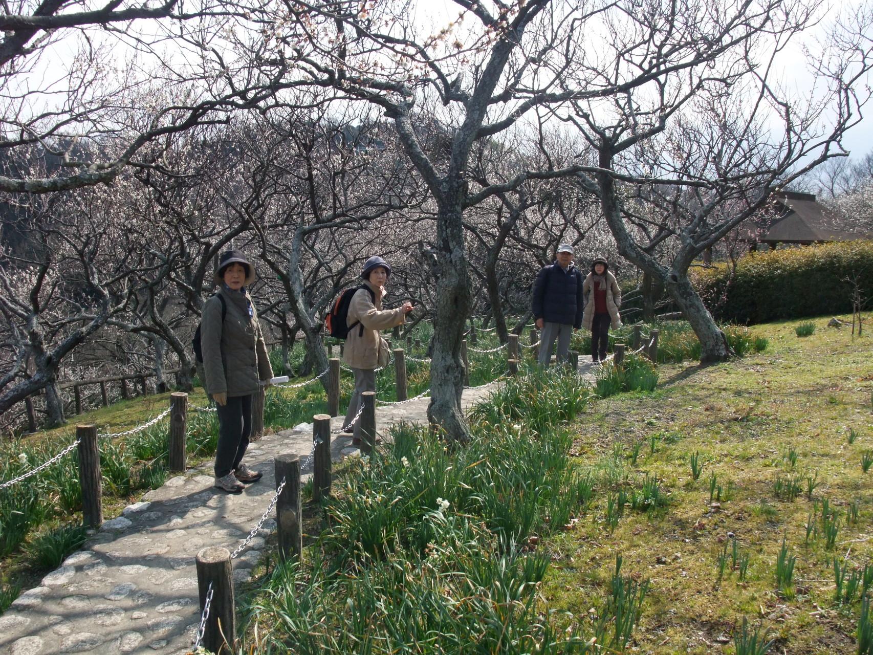 梅の里の散策路!