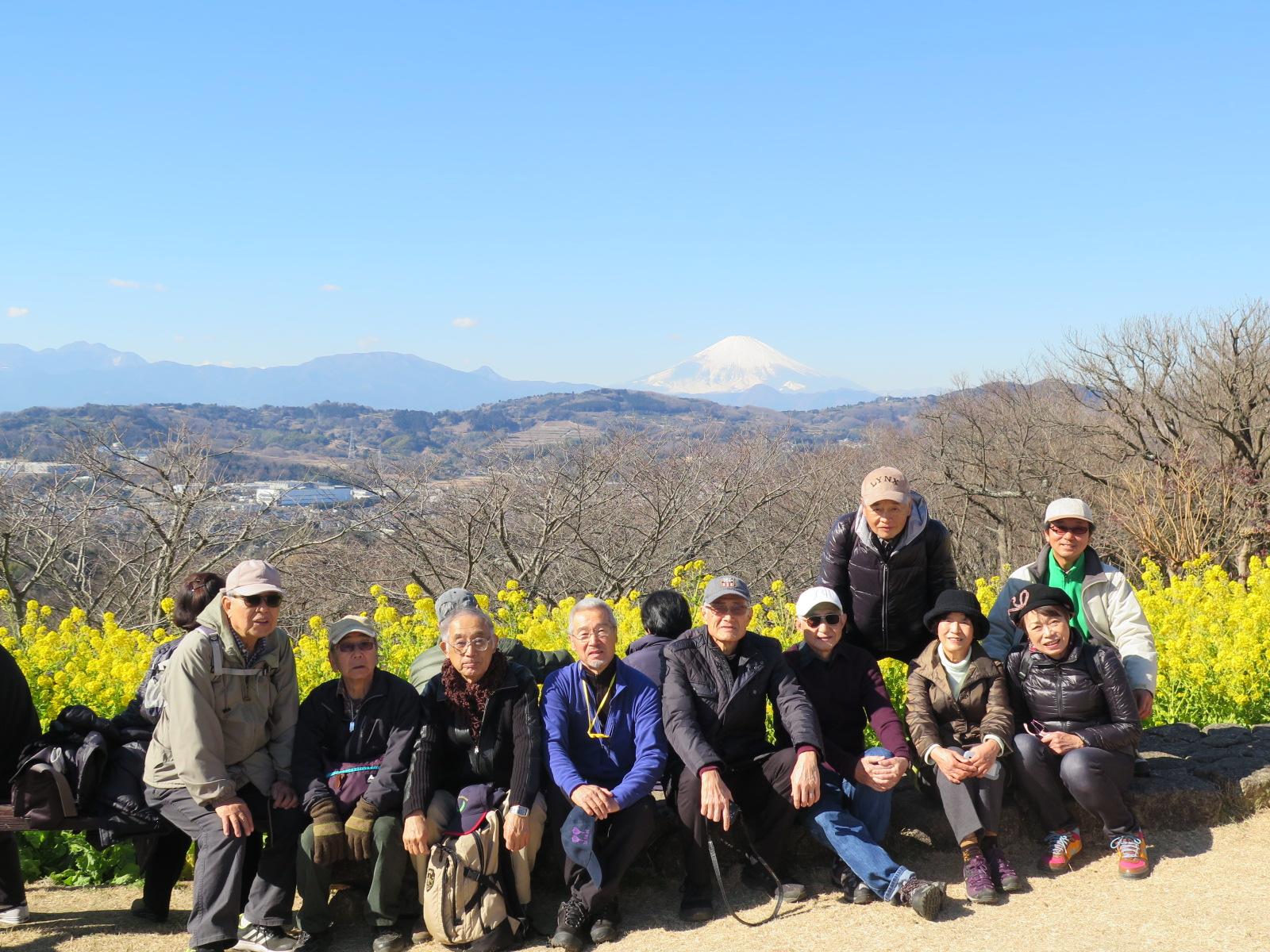 二宮 吾妻山山頂の菜の花と霊峰富士