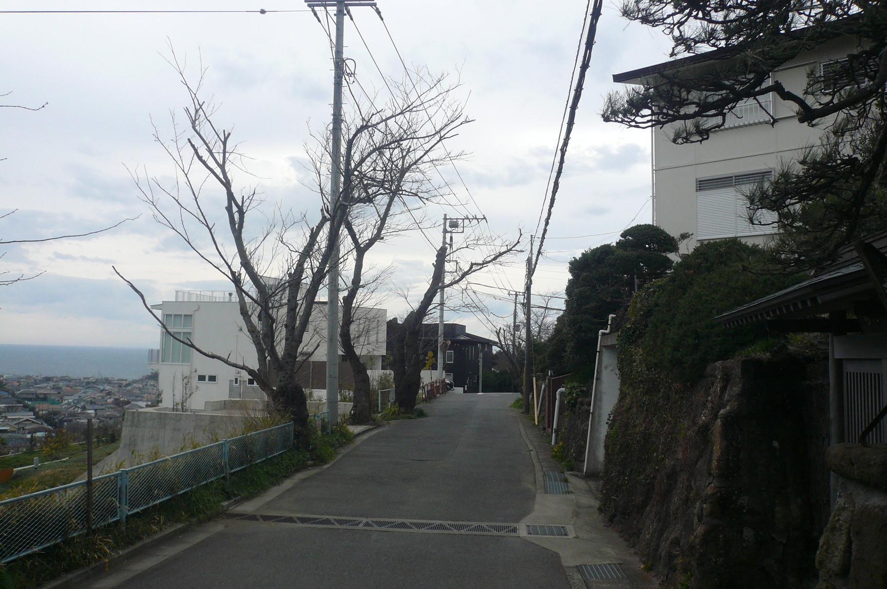鎌倉山の桜並木