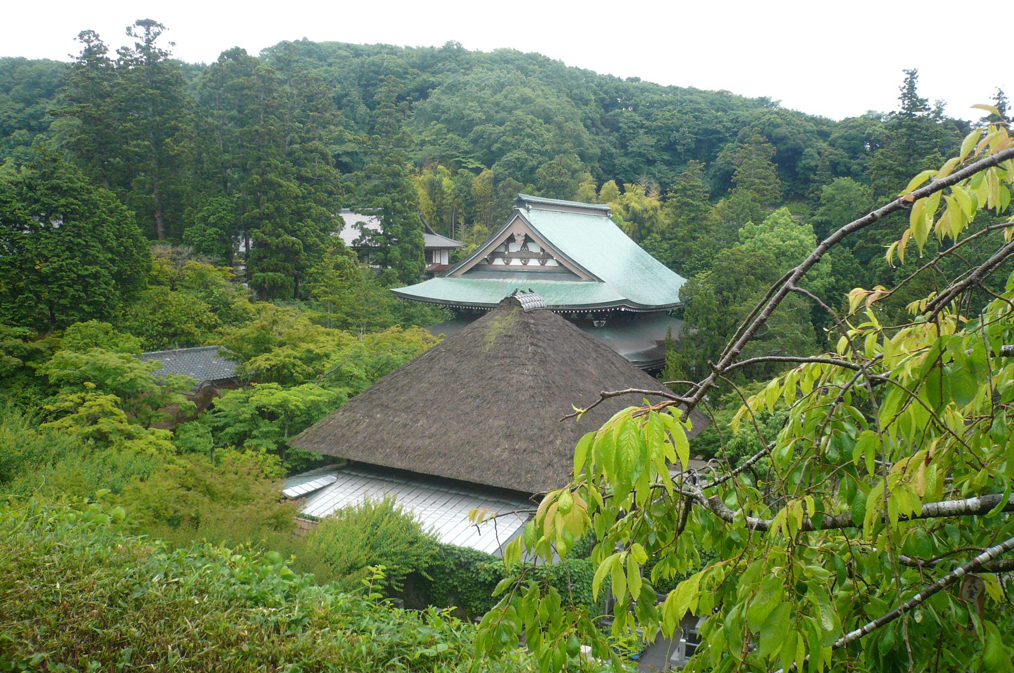 円覚寺境内を一望秋にはまた来たい